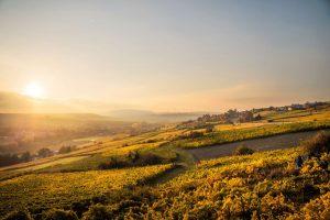 Chablis vineyard sunset