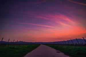 vineyard france sunset
